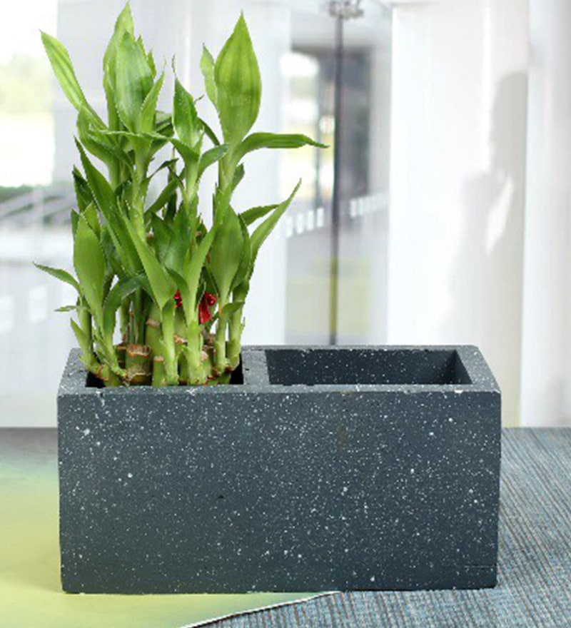 Charcoal Concrete Homelux Planter by Conkreate