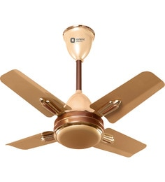 Ceiling fan online buy ceiling fans at best prices in india pepperfry orient quasar ornamental golden chocolate 600mm designer ceiling fan mozeypictures Gallery