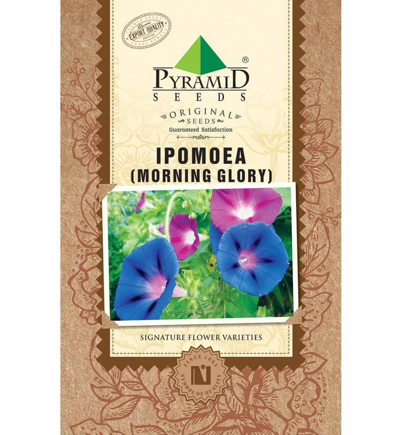Ipomoea Seeds by Pyramid Seeds