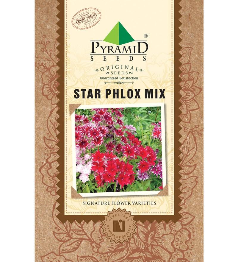 Pyramid Star Pholex Mix Seeds