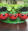 Wonderland Smily Tomato Face with Three Pots